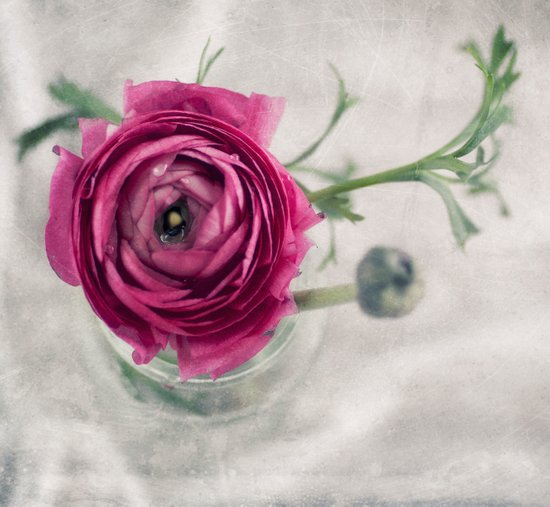 Pink III Art Print