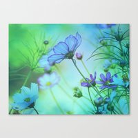 Softness Canvas Print