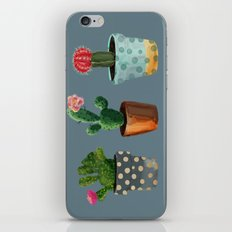 Three Cacti With Flowers On Blue Background iPhone & iPod Skin