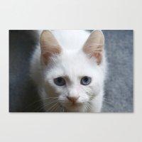 Turkısh Van Cat Canvas Print