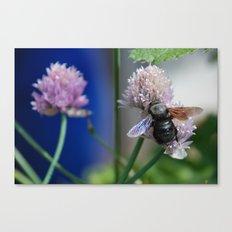 Carpenter Bee 1 Canvas Print
