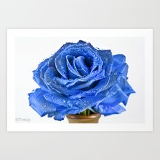 Magical Blue Rose  Art Print