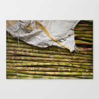 sugar cane Canvas Print