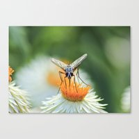 Bug on a flower Canvas Print