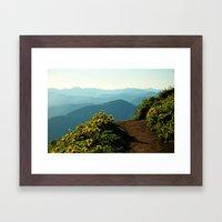 Flowering Balsam Root on Dog Mountain, Columbia River Gorge, Oregon Framed Art Print