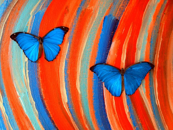 Blue Morphos on # 4 Art Print