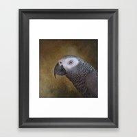 African Grey Parrot Framed Art Print